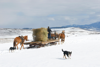 sled moving hay
